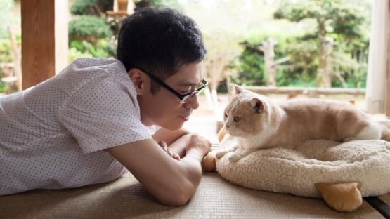 Live Action Neko Atsume Teaser Trailers Play with Genre