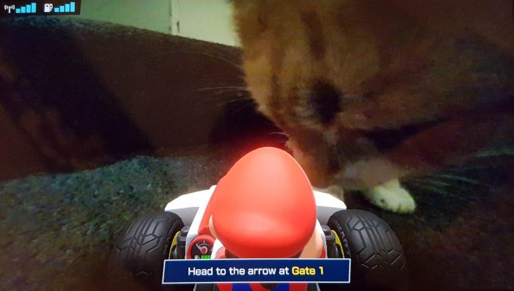 Mario Kart Live cat